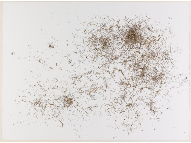 Annie Farrer grass-fragments-paper