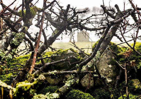 John White Two Trees Barn Through Wet Hedge